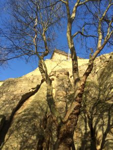 Tree and the sandstone Castle Rock